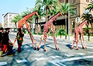Foto_Girafes